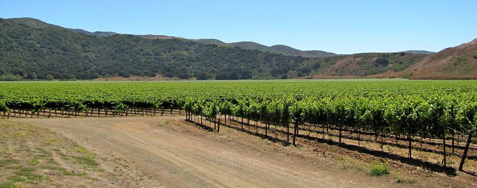 Explore Santa Barbara Wine Country.